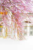 White Tree Photographic Print by Katarzyna Kuban