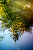 Tree Reflection Photographic Print by Katarzyna Kuban