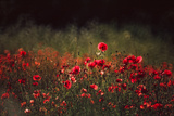 Meadow with Poppies 5 Photographic Print by Ursula Kuprat