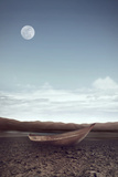 Wilderness Photographic Print by Daniela Owergoor