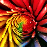 Multicoloured Patels Photographic Print by Ronaldo Pichardo