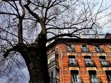 Tenement House Photographic Print by Ronaldo Pichardo