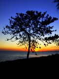 The Sun Setting Behind a Tree Photographic Print by Ronaldo Pichardo