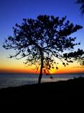 The Sun Setting Behind a Tree Photographic Print by Ronaldo Pichardo