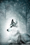 Wolf Photographic Print by Svetlana Sewell