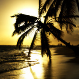 Tropical Beach Photographic Print by Ronaldo Pichardo