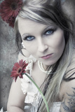 Whit Crimson Gerberas Photographic Print by Sabine Rosch