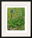The Iris Prints by Vincent van Gogh