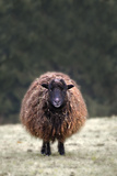 Wool Photographic Print by Wolfgang Simlinger