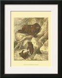 Small Brown Bear Posters by Friedrich Specht