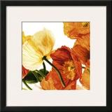 Poppies III Prints by Richard Weinstein