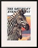 Zebras Posters by Jack Murray