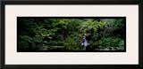 Ayrlies, Auckland, New Zealand Prints by Alain Le Toquin