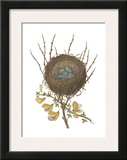 Antique Bird's Nest II Prints by James Bolton