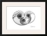 Nautilus Triplet Posters by Albert Koetsier