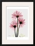 Pink Gerbera Triple Prints by Albert Koetsier