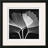 Ginkgo Close Up Black and White Prints by Albert Koetsier