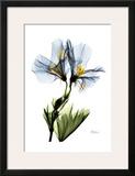 Gracious Geranium Art by Albert Koetsier