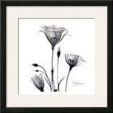 Gentian Trio in Black and White Posters by Albert Koetsier