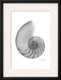 Nautilus Single Prints by Albert Koetsier