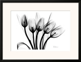 Early Tulips N Black and White Prints by Albert Koetsier