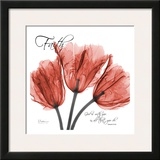 Royal Red Tulip, Faith Prints by Albert Koetsier