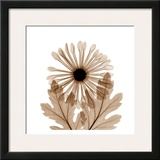 Chrysanthemum in Sienna Posters by Albert Koetsier