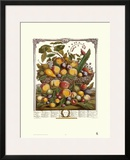 Twelve Months of Fruits, 1732, July Print by Robert Furber