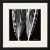 Double Leaf White on Black Print by Albert Koetsier