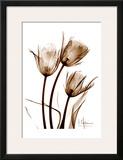 Tulip Arrangement in Brown Posters by Albert Koetsier