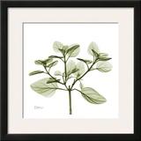 Green Leaves in Bloom II Prints by Albert Koetsier