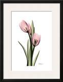Annie Tulip Print by Albert Koetsier