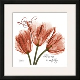 Royal Red Tulip, Laugh Print by Albert Koetsier