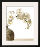 Orchid Branch Poster by Stephane De Bourgies
