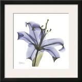 Lily in Purple Prints by Albert Koetsier