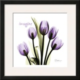 Tulip in Purple, Imagine Prints by Albert Koetsier