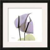 A Gift of Flowers in Lavender Prints by Albert Koetsier