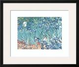 Irises, Saint-Remy, c.1889 Print by Vincent van Gogh