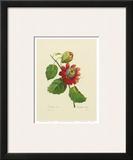 Red Passion Flower Prints by Pierre-Joseph Redouté