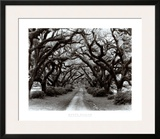 Path in the Oaks II, Louisiana Prints by Monte Nagler