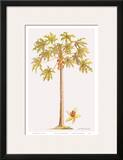 Papaya Tree, Botanical Illustration, 18th Century Prints by Georg Dionysius Ehret