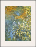 Yellow Iris Art by Claude Monet