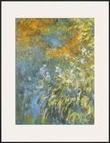 Yellow Iris Art by Claude Monet