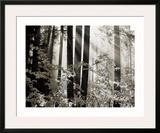 Misty Forest Prints by Dennis Frates