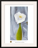 Calla Lilly On Grey Art by Georgia O'Keeffe
