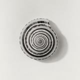 Seashell Photographic Print by Graeme Harris