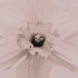 White Flower Photographic Print by Graeme Harris