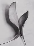 Leaves Photographic Print by Graeme Harris