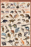 Marsupials Plakat