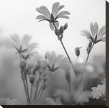 White Garden B&W Stretched Canvas Print by Andreas Stridsberg